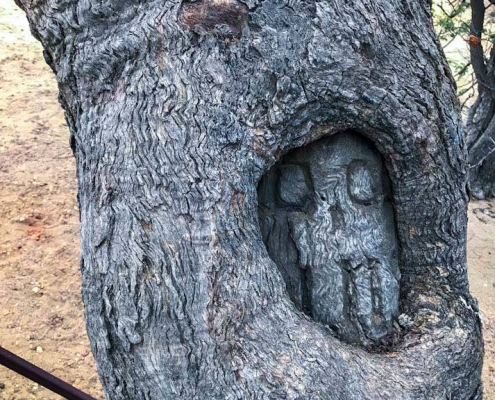 Face Tree, Dig Tree Reserve